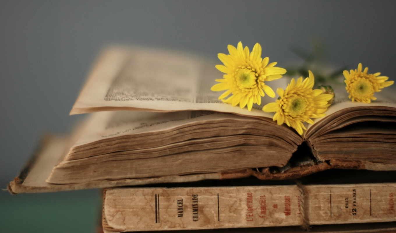 книга, страницы, цветы, стиль,