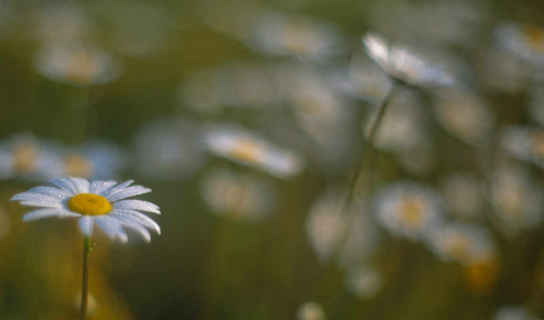 цветы, подборка, subject, картинкой, страница, можно,