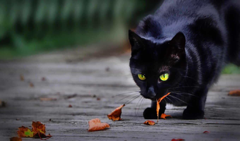 кот, black, wild, леопард, leaf, рысь, portrait, спать, stay, мебель