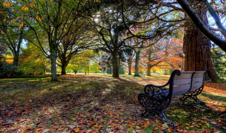 осень, скамейка, park, oir