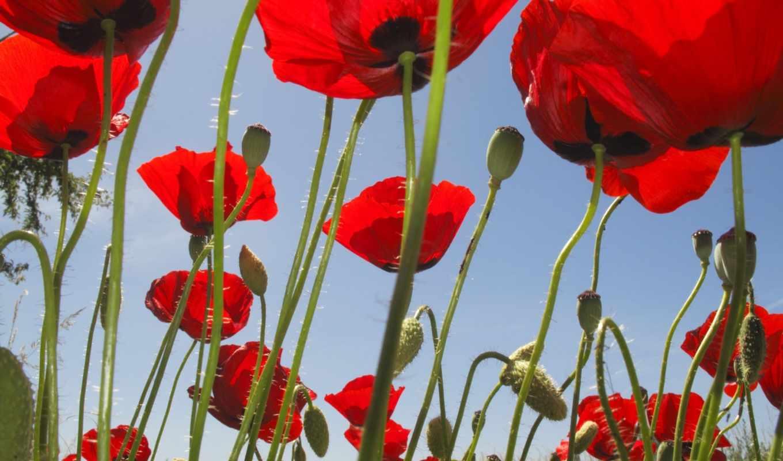 hoa, цветы, anh, девушек, news, tiên, nóng, tóc, подборка, красивых, страница,