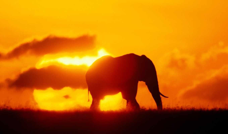 слон, силуэт, слоны, закат, закате, zhivotnye, добавить,
