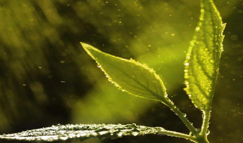 листья, макро, капли, растение,