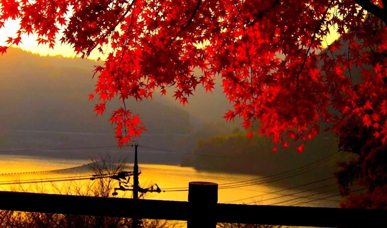 листья, река, забор, клен, золото, природа, красные, картинка, картинку,