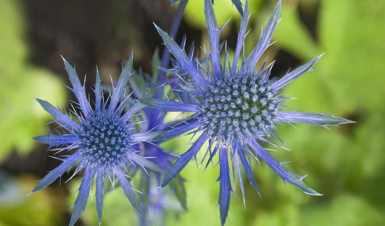 flora, марина, visitas, цветы, качественная, большая, коллекция, самая, возможность, ecuador, лагос, закачки, форматы,