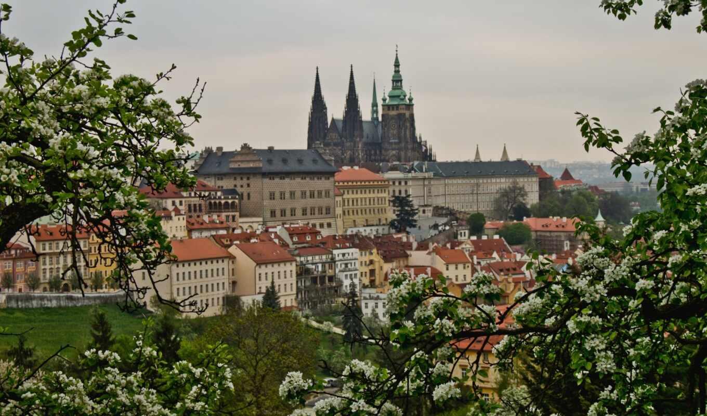 весна, чехия, чехии, прага, цветение, панорама, деревя, здания, взгляд,