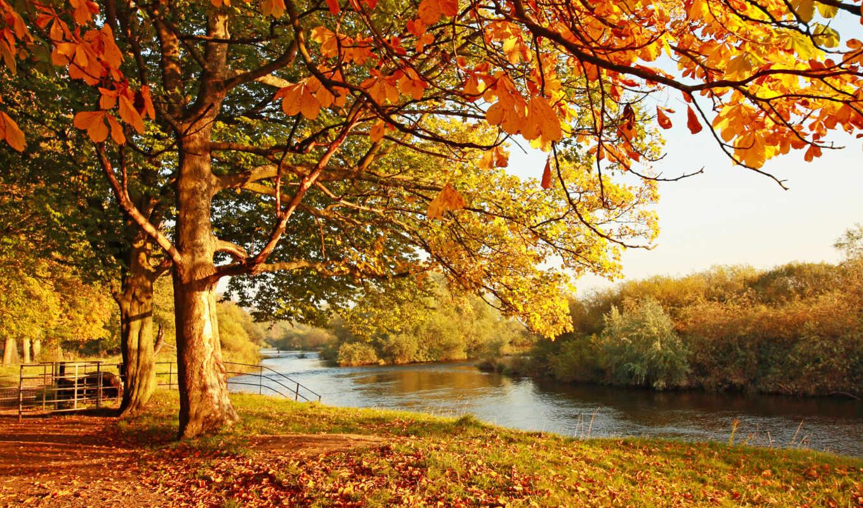 ,лес,каштан,река,осень,