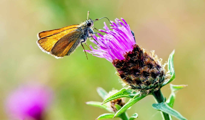 insectos, par, sur, photos, nice, envoyer,
