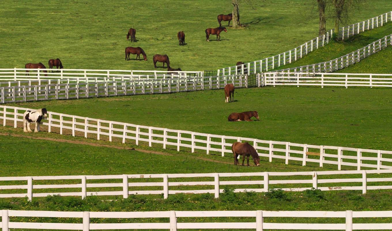kentucky, horses, lexington, vfl, horse, thoroughbred, animals, you, desktop,