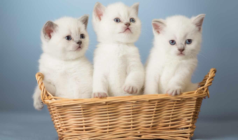 кошки, самые, котята, cats, коллекция, live, качестве, кот,