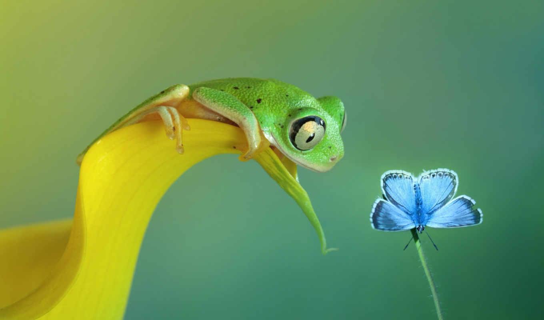 лягушка, бабочка, дотянуться,, blue, лягушки,,
