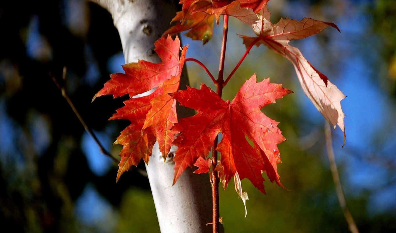 bosque, pulpit, osen, осень,
