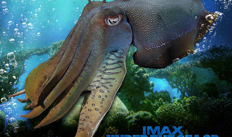 под, море, ocean, life, animals, free, небо,