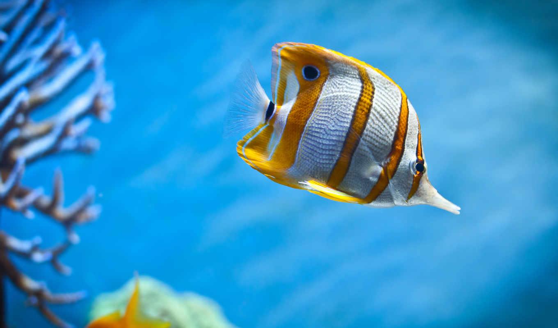 аквариум, fish, deep, море,
