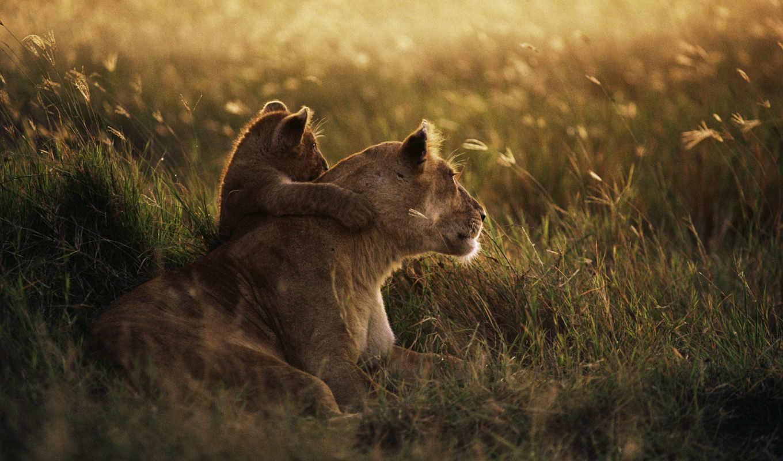 national, park, serengeti, танзания, lion, african, детёныш, рассвет, мама, photos,