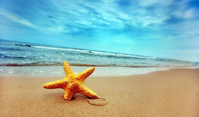 summer, море, моря, звезда, волна, морские,