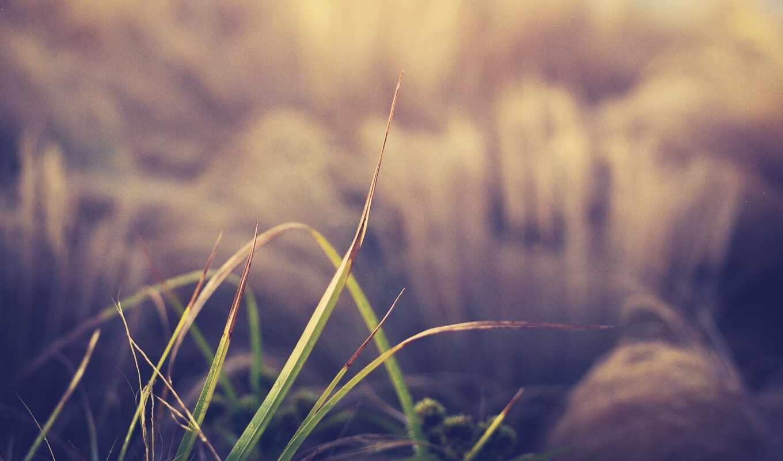 размытость, природа