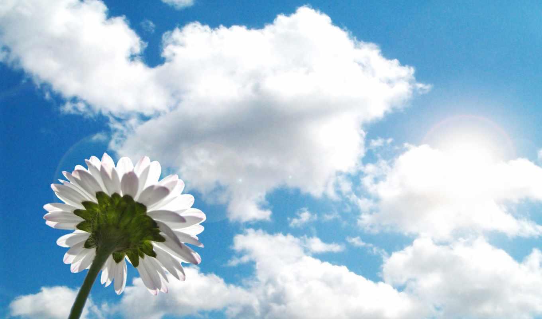 ,облака, небо, цветок, ромашка, лето,