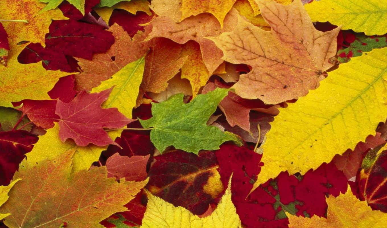 осень, золотая, листья, опавшие, природа, часть, года, времена, картинка, за, мотив, кнопкой, картинку, правой,