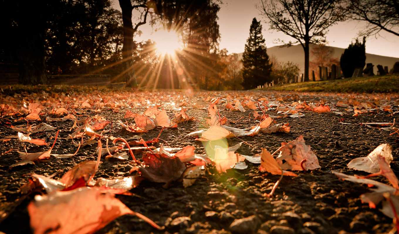 листва, макро, свет, осень, лучи, дорога, солнце, блики,
