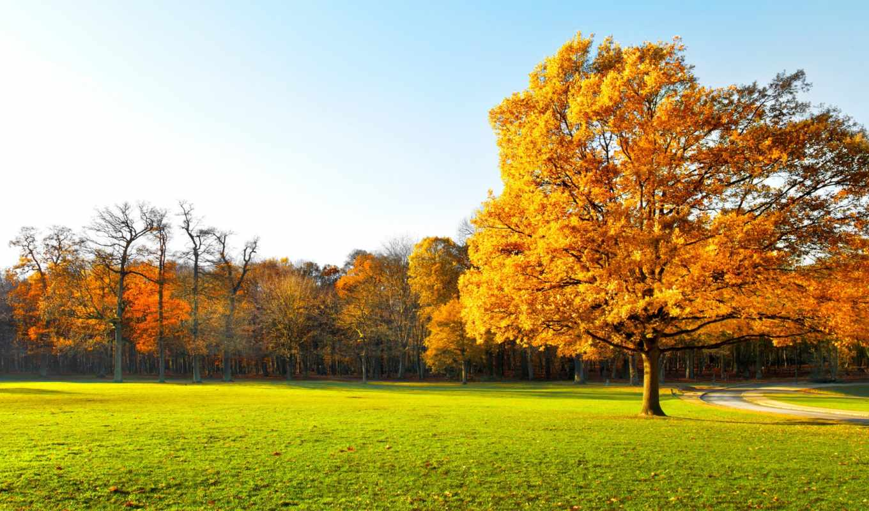 осеннем, природа, лесу, осень, click, pri, модульная, enlarge, изображение, картинка, landscape,