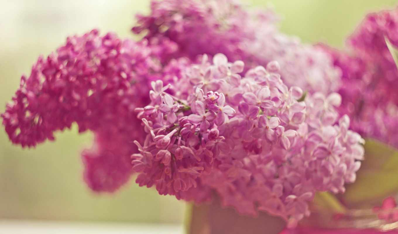 цветы, сиреневый, широкоформатные, розовый,