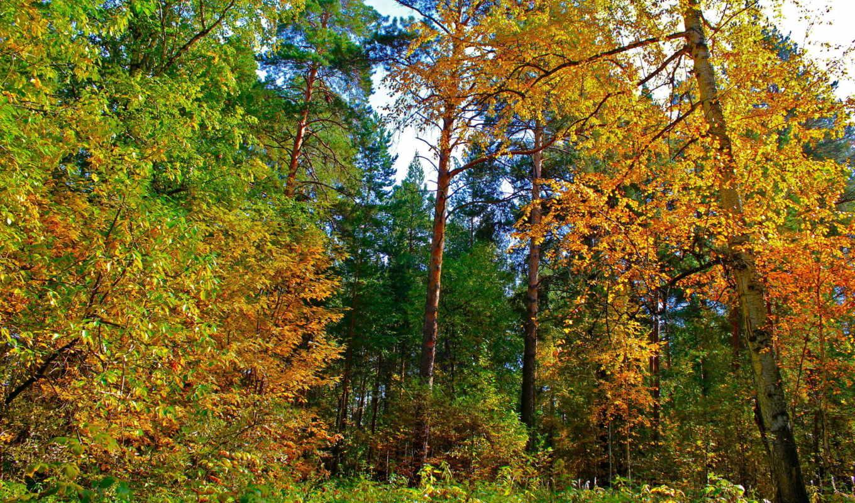 природа, осень, листья, scenery, деревя, желтые, рисунки, seaside, екатеринбург,