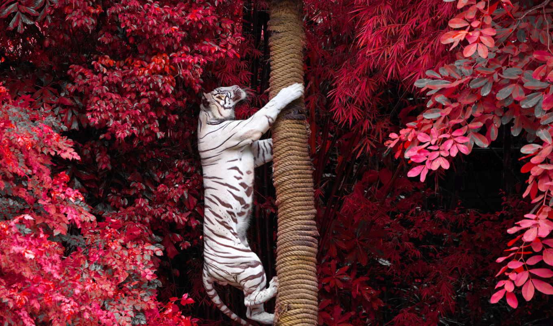тигр, white, images, фотообои, fone, дерево, animal,