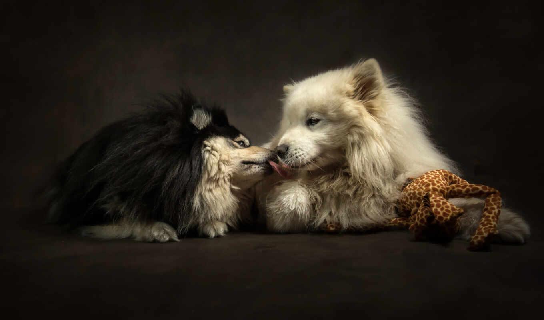 собака, поцелуй, двух, нежность, love, animal, кот, canine
