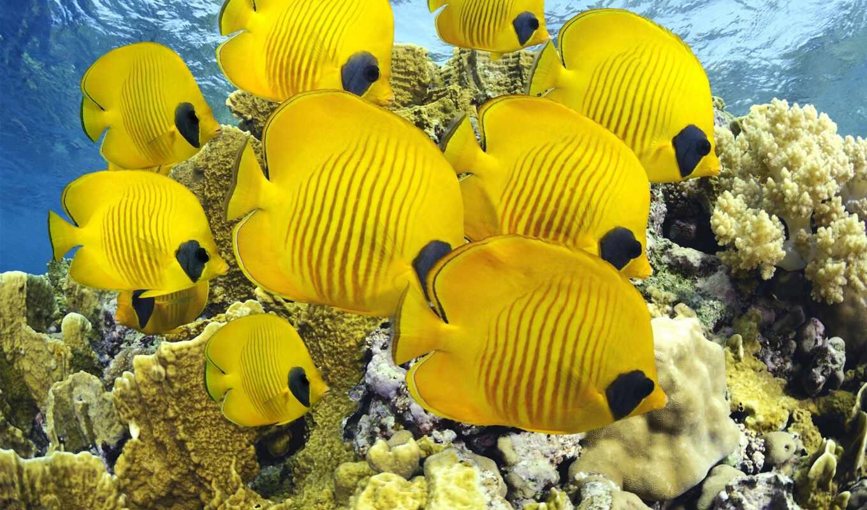 yellow, мм, fish, rook,