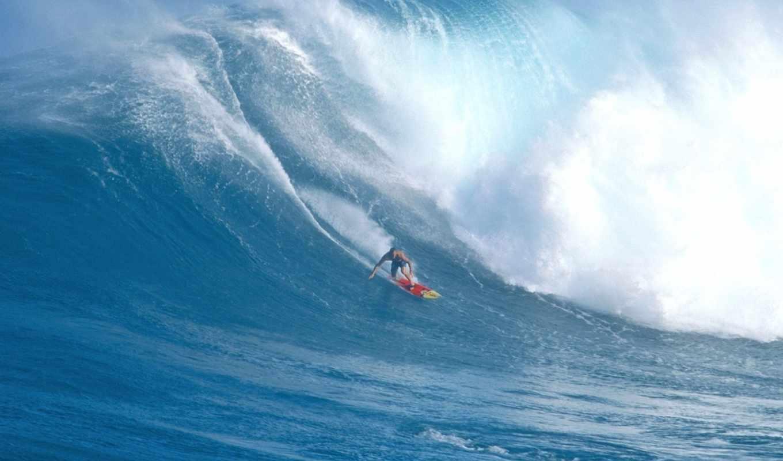 акулы, острова, остров, гавайях, островов, мауи, гавайские, самые,