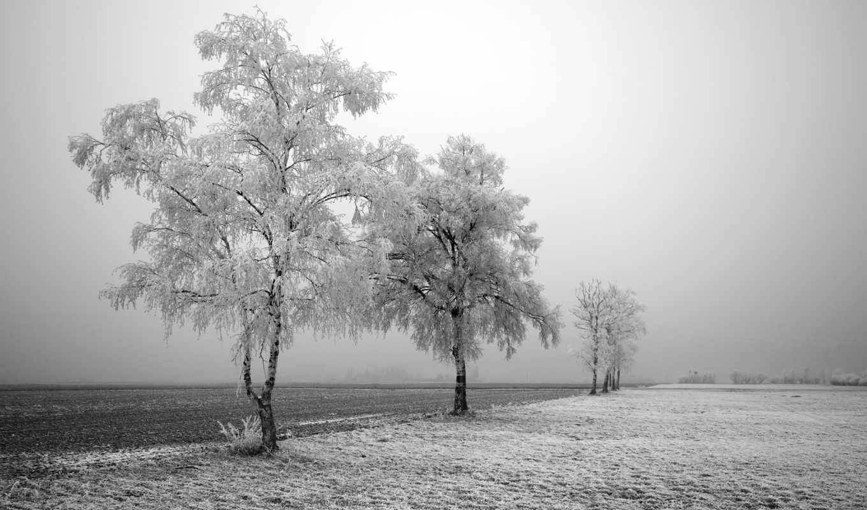 winter, christmas, снег, scene, that, obtaining, впервые, scenes,