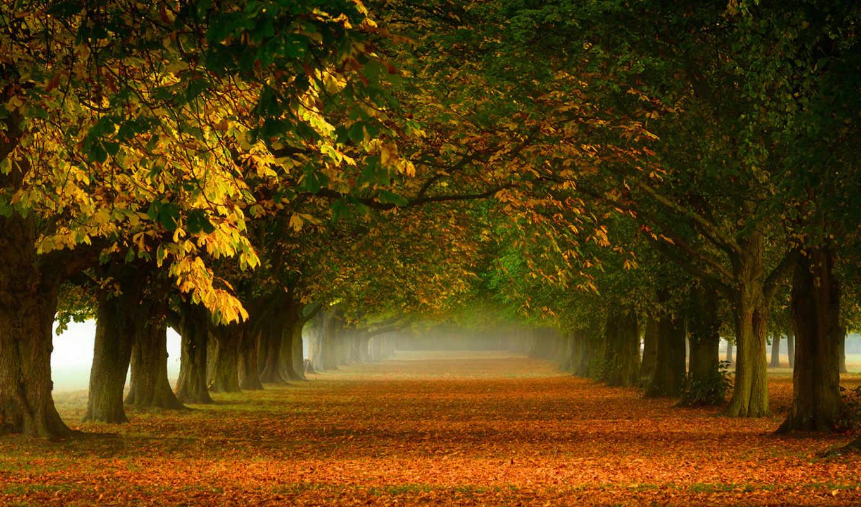 качества, коллекция, high, широкоформатных, trees, картинка, сайт,