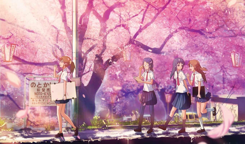 anime, Сакура, цветущая, лепестки,