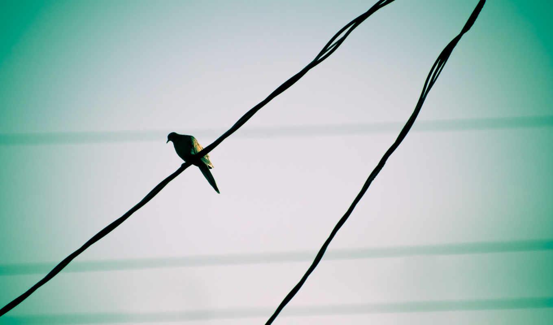 animals, art, high, birds, качество, definition, vehiclehi, women, pigeons, голубь