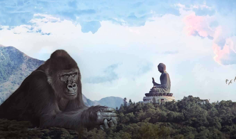 kong, king, buddha, public, hong, статуя, domain, загар, ispolzovanie, imagen, фото