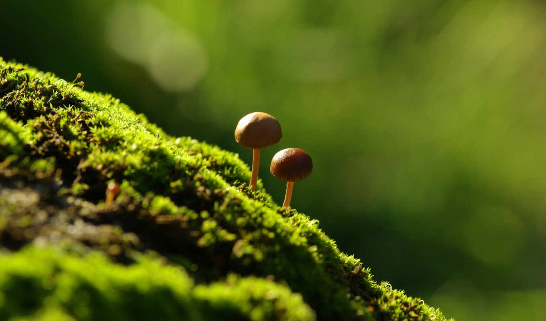 best, pack, грибочки, макро, мох, картинка,