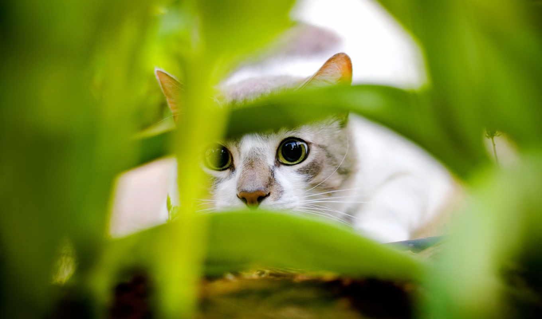 кошки, собаки, кот, тюлень, котята, траве, красивые,