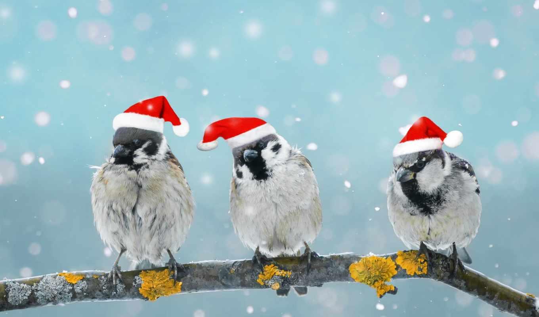 stock, fotos, una, compra, зимы, imágenes, pájaros, sentado, rama, изображение,