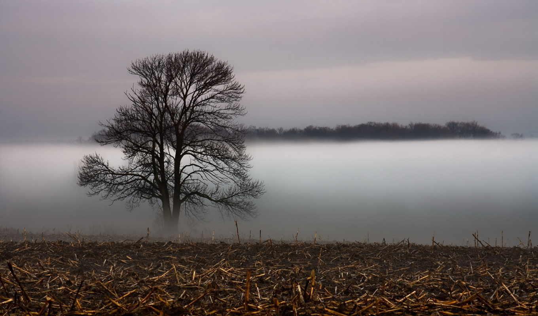 туман, дерево, поле, landscape, закат, трава,