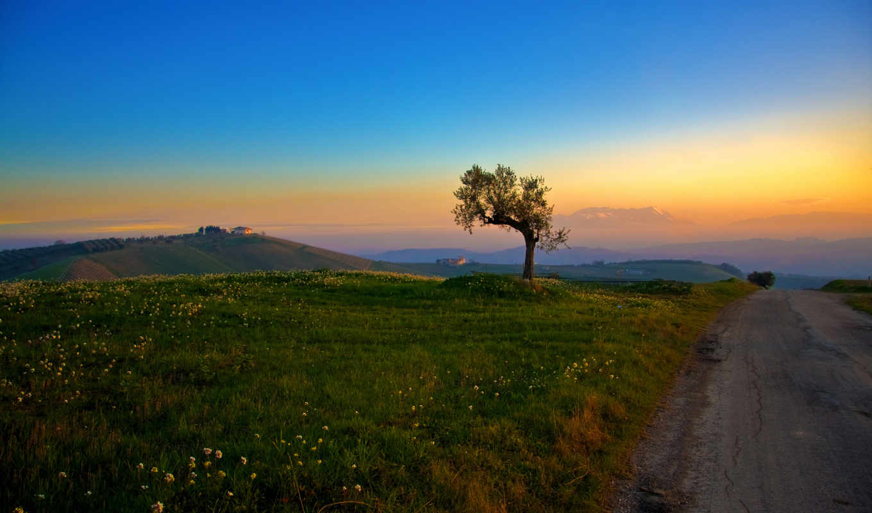 дорога, назад, вдаль, картинку, дерево, eli, одинокое, снежные, distance,