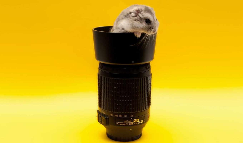 nikon, объектив, фотоаппарат, top, photography, animals, free,