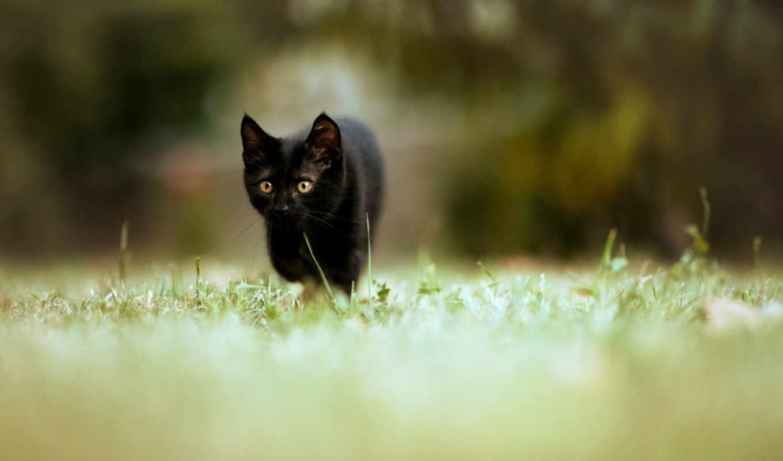 мыши, тише, охоте, картинка, картинку, кликните, кнопкой, левой, чёрный,