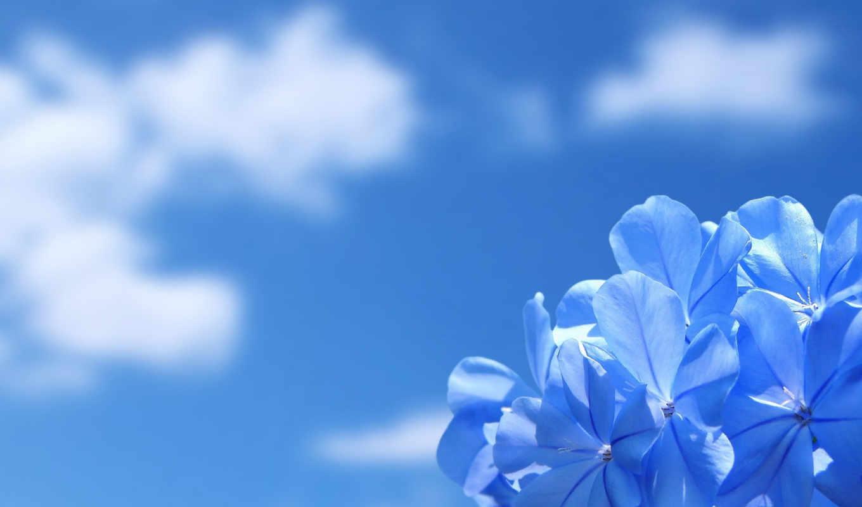 цветок, небо, красота, природа, облака, blue, çiçekler, mavi, квіти, airena, iphone,