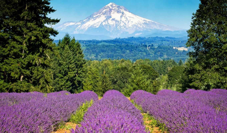 priroda, горы, лаванда, les, cvety, капюшон, mount,
