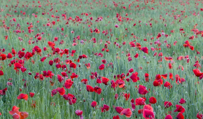 hoa, những, con, hương, tạo, hành,