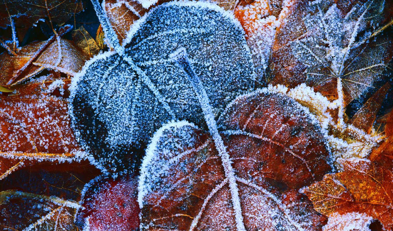 осень, листва, желтые, лед, фон, yellow, иней, листья,