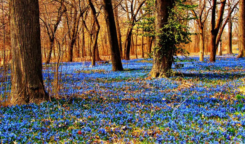 цветы, лес, года, time, лесу, весна, подснежники, подснежник,