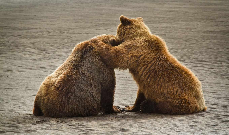медведи, животные, бурые, park, katmai, national, аляска, grizzly,