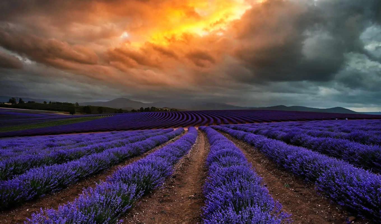 lavender, пейзажи -, мб,